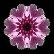 Violet And White Dahlia I Flower Mandala Art Print
