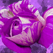 Violet And White Rose Print by Bruce Nutting
