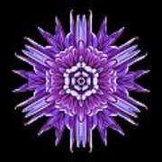Violet Chrysanthemum Iv Flower Mandala Art Print
