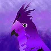 Violet Cockatiel Art Print