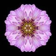 Violet Dahlia II Flower Mandala Art Print