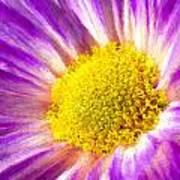 Violet Flower Macro Art Print