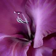 Violet Passion Gladiolus Flower Art Print