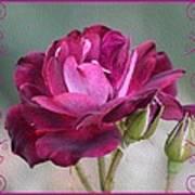 Violet Red Rose Art Print