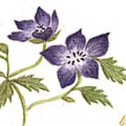 Violet Art Print