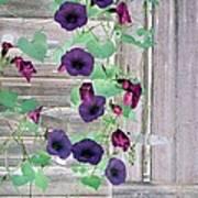 Violet Vine - Photopower 324 Art Print