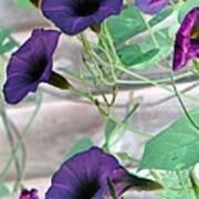 Violet Vine - Photopower 326 Art Print