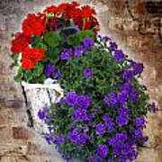 Violets And Geraniums On The Bricks Art Print