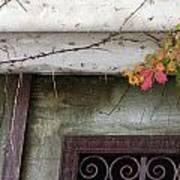 Virginia Creeper In Fall Colors Art Print