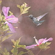 Visitor In The Rose Of Sharon Art Print