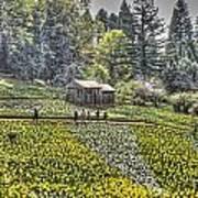 Visitors On Daffodil Hill Art Print