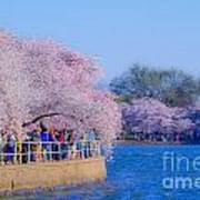 Visitors To The Blooms On The Basin Art Print