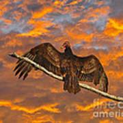 Vivid Vulture Art Print by Al Powell Photography USA