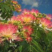 Voluntary Mimosa Tree Art Print
