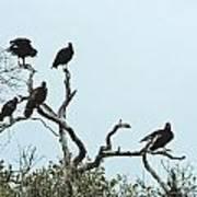 Vulture Club Art Print