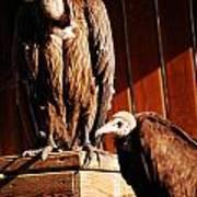 Vulture Male Art Print