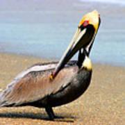 Wadding Pelican  Art Print