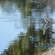 Wading Bird Art Print