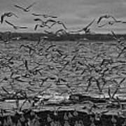 Wading Birds-black And White Art Print