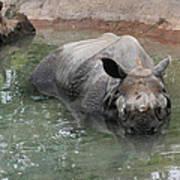 Wading Rhinos Art Print