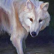 Wading Wolf Art Print