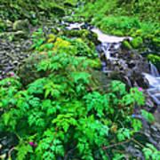 Wahkeena Falls In The Columbia River Gorge Art Print