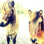Eager Horses Waiting For Their Simple Dinner Art Print
