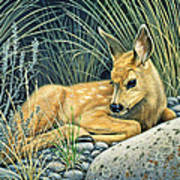 Waiting For Mom-mule Deer Fawn Art Print
