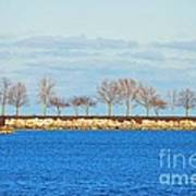 Waiting For Summer - Trees At The Edge Art Print