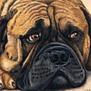 Waiting Bullmastiff Drawing Print by Michelle Wrighton