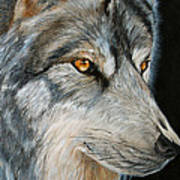 Waiting Wolf Art Print