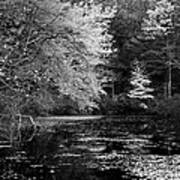 Walden Pond Art Print by Christian Heeb
