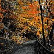Walk In Golden Fall Art Print