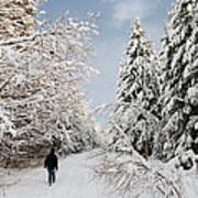 Walk In The Winterly Forest With Lots Of Snow Art Print