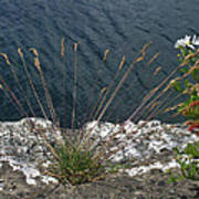 Flowers In Rock Art Print