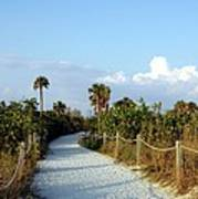 Walk Way To Beach Art Print
