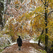 Walking Into Winter - Beautiful Autumnal Trees And The First Snow Of The Year Art Print by Matthias Hauser