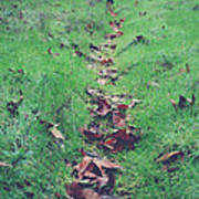 Walking The Path Less Traveled Art Print