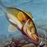 Walleye Ice Fishing Print by Jon Q Wright