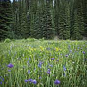 Wallowa Wildflowers Art Print