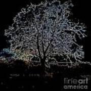 Walnut Tree Series Glowing Edges Art Print