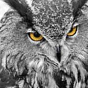 Watching You Owl Art Print