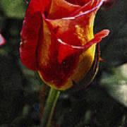 Warm Colored Rosebud  Art Print