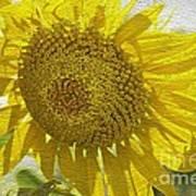Warmth Upon My Back - Sunflower Art Print