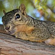 Wary Squirrel Art Print