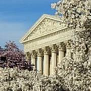 Washington Dc Cherry Blossom Supreme Court Art Print