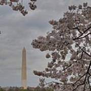 Washington Monument - Cherry Blossoms - Washington Dc - 011319 Art Print by DC Photographer