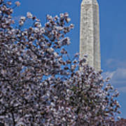 Washington Monument Print by Susan Candelario
