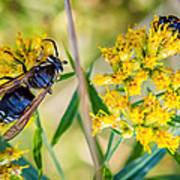 Wasp 2 Art Print