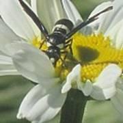 Wasp On Daisy Art Print